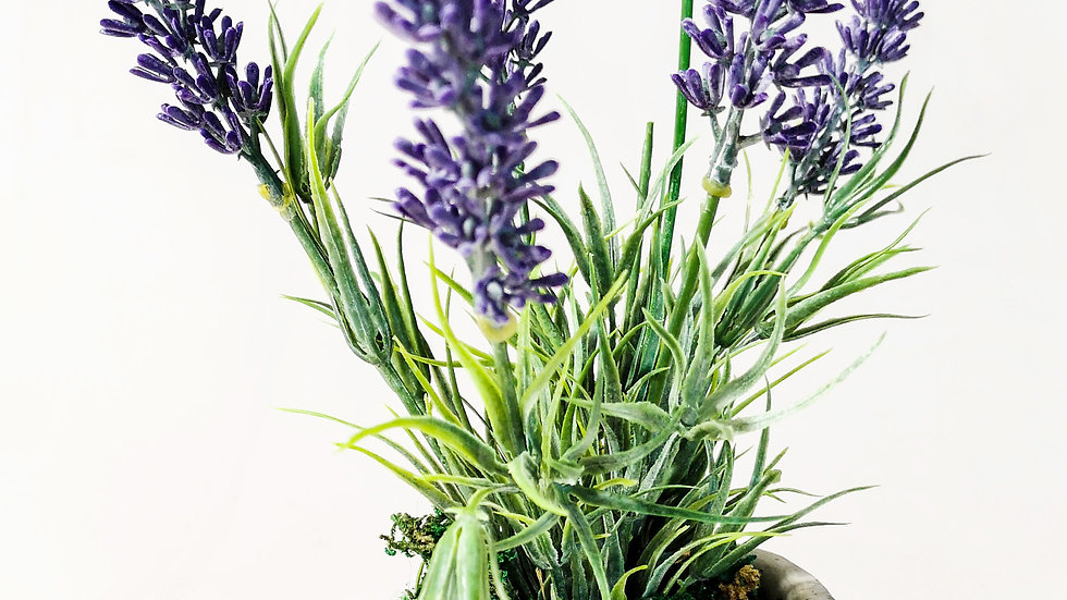 small Potted Meadow Lavender