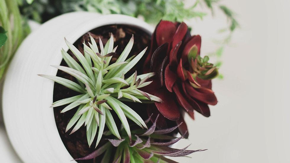 copy of Succulent Pot Combo Arrangement