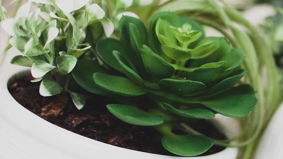 Succulent Pot Combo Arrangement