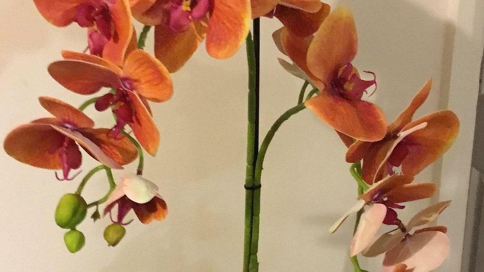 Phalaenopsis orchid arrangement