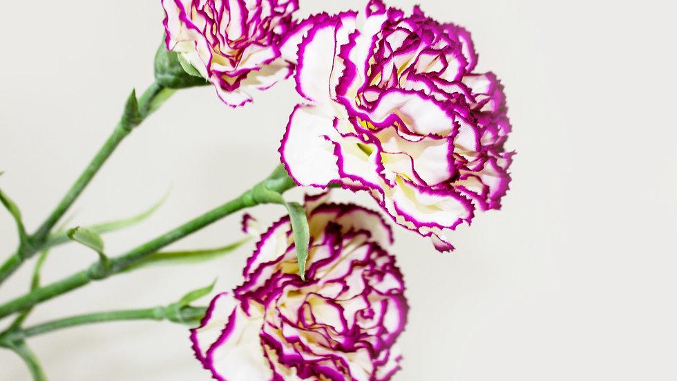 Carnation Stem Mix 3 for £12