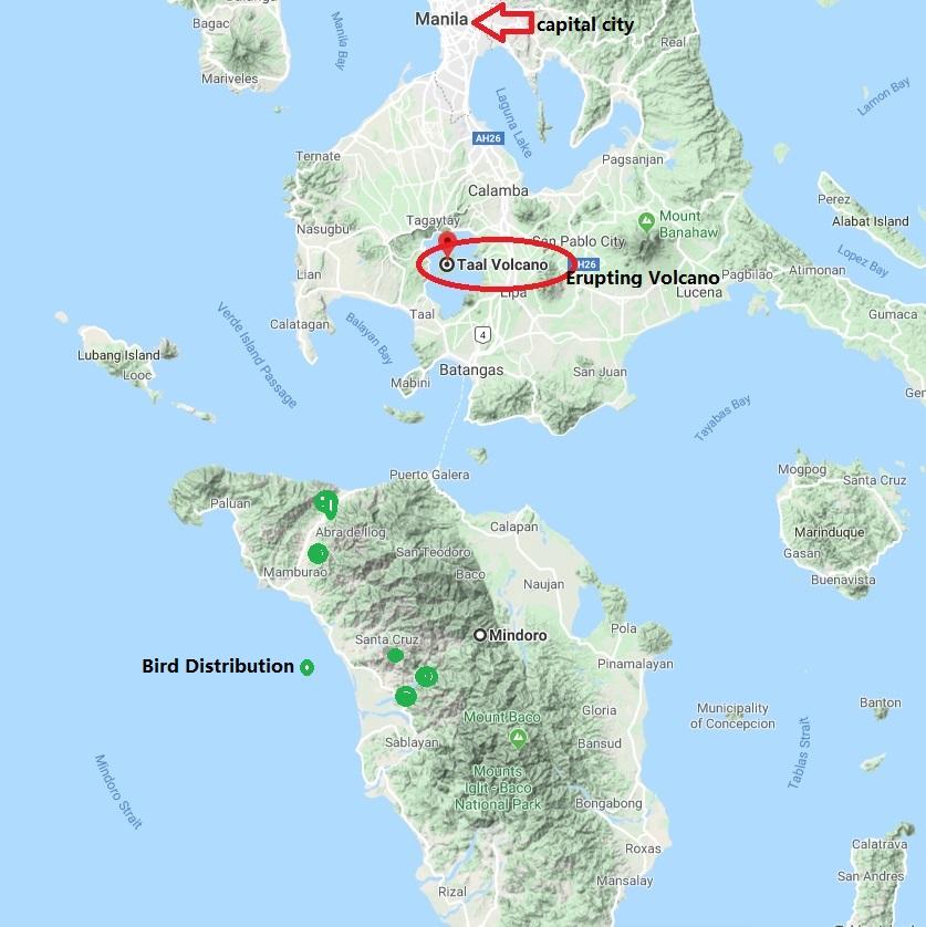mindoro bird distribution (green)