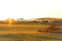 Villageside Farm