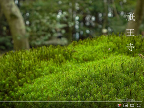 4K High Resolution Video Clips About Japanese Garden in Kyoto
