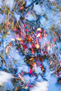 HOKKAIDO PHOTO  FESTA2019ポートフォリオグランプリ受賞・写真集出版記念  桑迫伽奈写真展「不自然な自然」