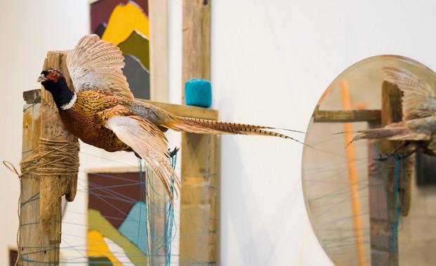 Robertsons Pheasant.jpg