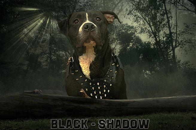 black chadow.jpg