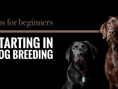 DOG BREEDING TIPS FOR NEW ETHICAL DOG BREEDERS