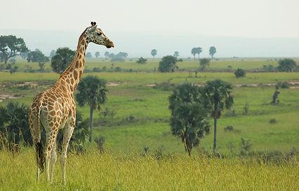 Uganda image.jpg
