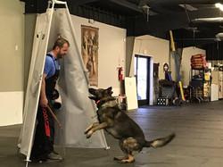 Fini doing hold/bark