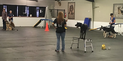 Missouri's Best Dog Training, Boarding and Grooming