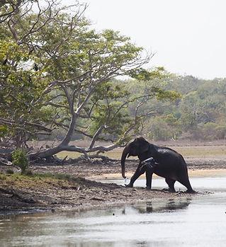 sri lanka - elephant wilpattu - Meike Si