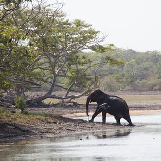 Why Sri Lanka Is Your Next Adventure Sport Destination