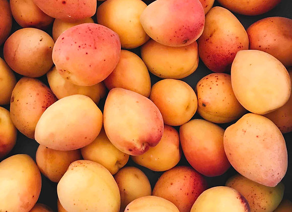 Aprikosenkuchen mit Blätterteig