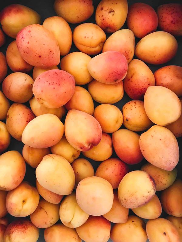 Jahreszeitenküche: Quarkcreme mit Aprikosen und Rosmarin