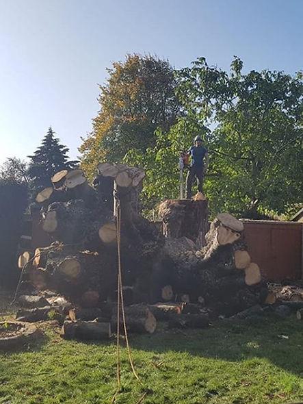 Daniel Tree Surgeon stood on top large s