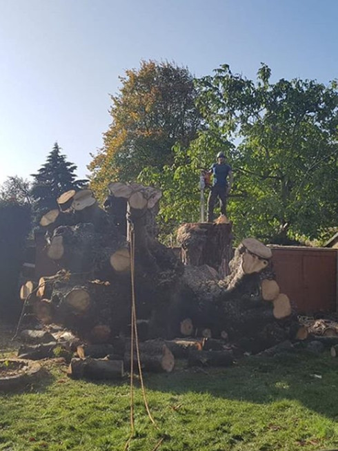Daniel Tree Surgeon stood on top large s