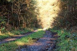 Dyffnant Forest