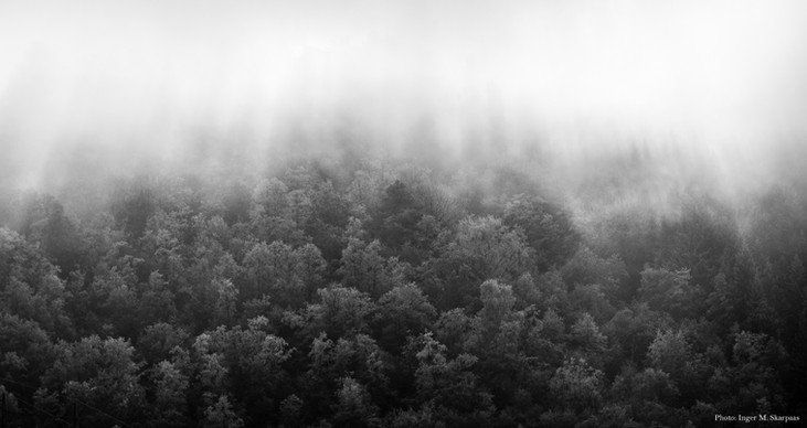 Forest in morning mist