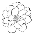 BLACK_FLOWER-05.png