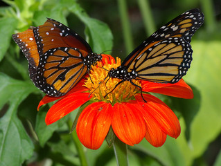 Attracting friends to your garden – the kind with wings!