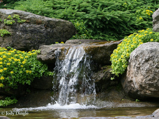 Why Add a Water Feature to  Your Yardscape?