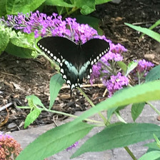 Butterfly plantings.jpg