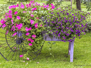Getting More Out of Your Garden: Be Creative with Planters!