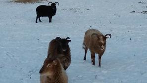 wilmas-girls-in-snow-feb-19_orig.jpg