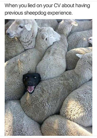 sheep-cv_orig.jpg