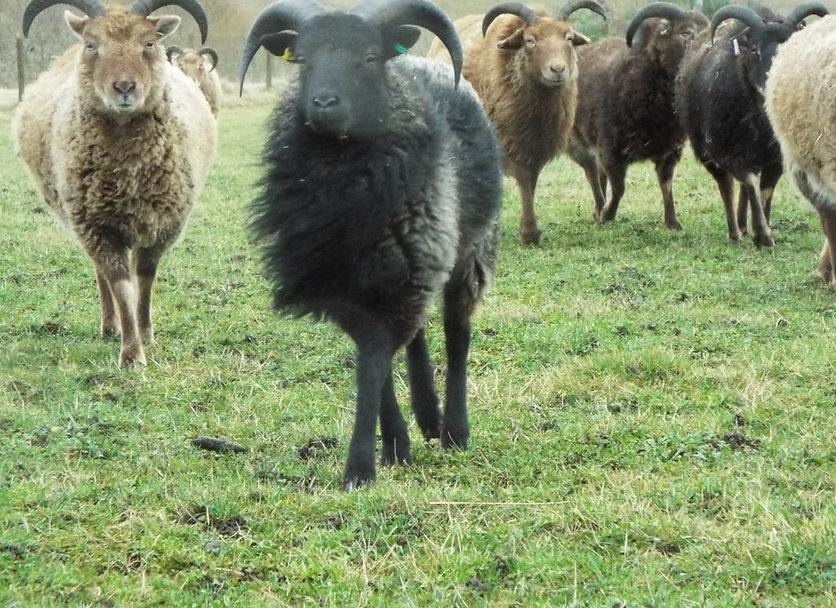 ashyboy-n-flock-jan-19_orig.jpg