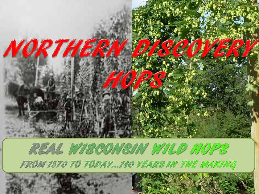 Silverhops | Northern Discovery Wild Wisconsin Hops