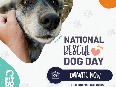 Tell us your dog rescue story