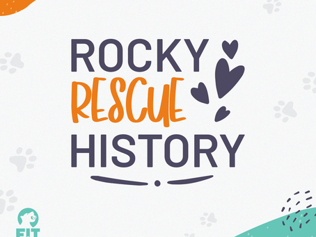 Rescue Stories: Meet Rocky