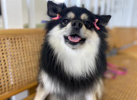 5 Signs Your Dog Needs Grooming