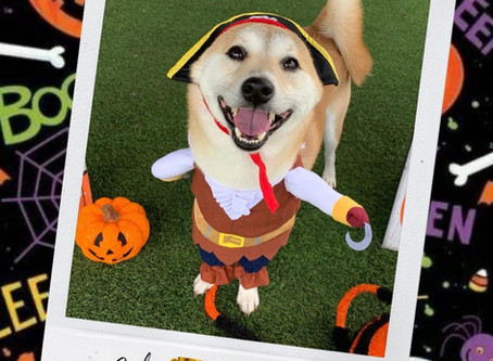 HOWL-O-WEEN Costume Contest (Oct 28 & 29)