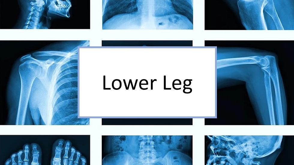 Lower Leg XR