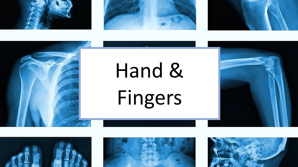 Hand and fingers XR
