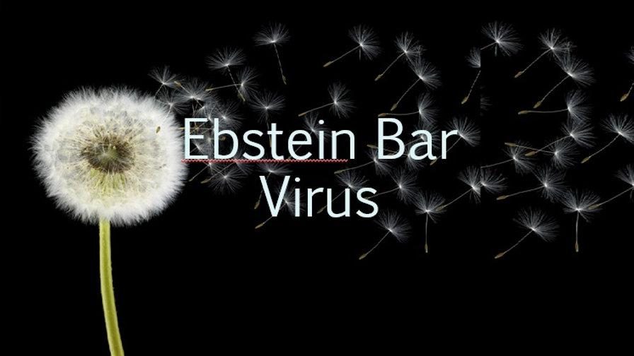 Epstein Bar Virus (EBV IgM)