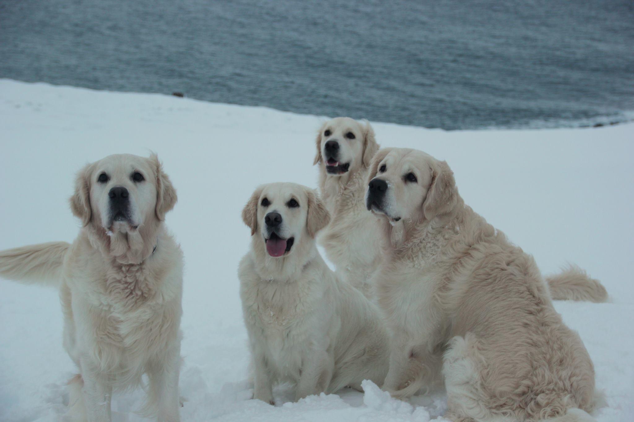 Josh, Sól, Stormur og Gutti saman