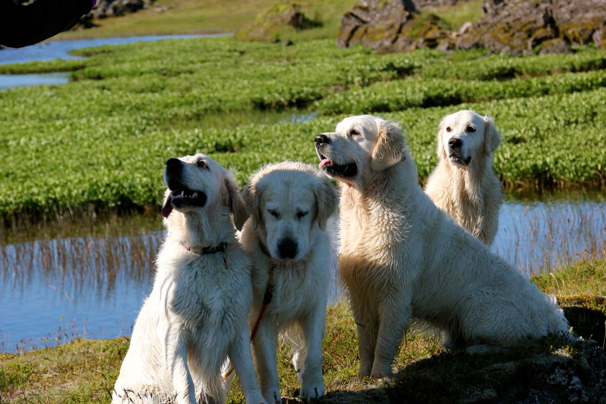 Grace, Josh, Gutti og Stormur