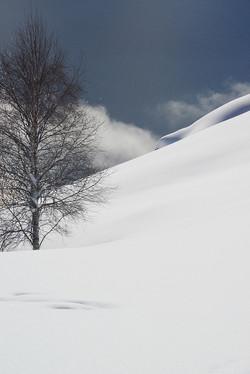 winter tree above lake
