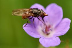 fly on flower 2