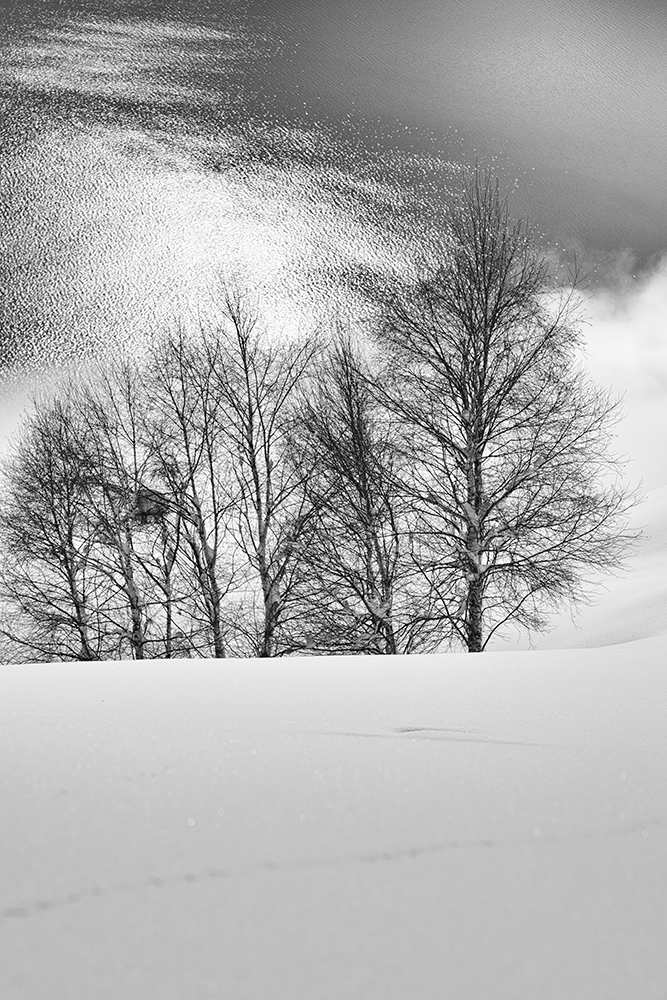 snowland 1