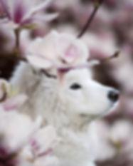 magnoliahoed_edited.jpg