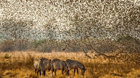 The Seven Year Safari