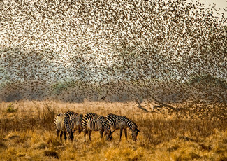 Flocking Overhead