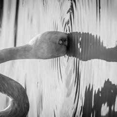 Elephant For Canvas - Samuel Cox-12.jpg