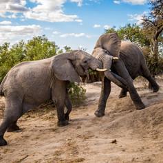 Elephant6, SamuelCox Digital Download.jp