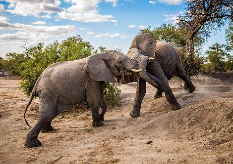 Elephant Clash